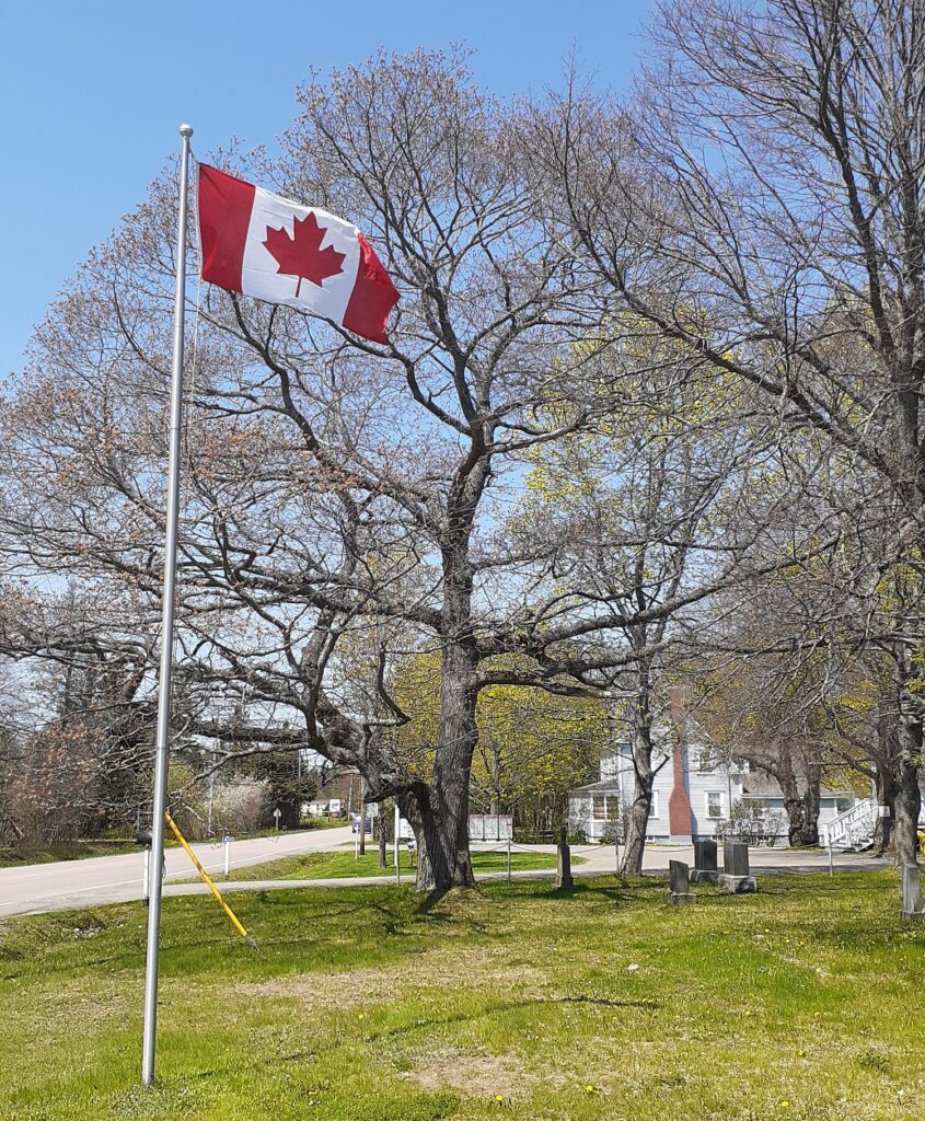 Canadian Flag and Red Oak taken at a tree lover's destination in New Brunswick. Quercus Robur St Martin's in the Woods, Shediac Bridge