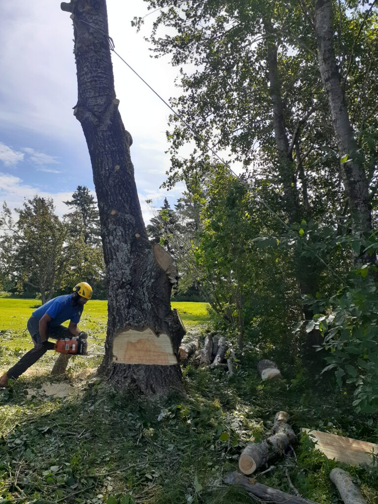 Rory Fraser crouches next to a tree and cuts at the trunk with a chainsaw.