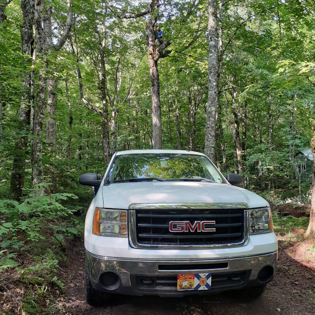 Our GMC Sierra parked on a small dirt road in a sugar bush in Nova Scotia.