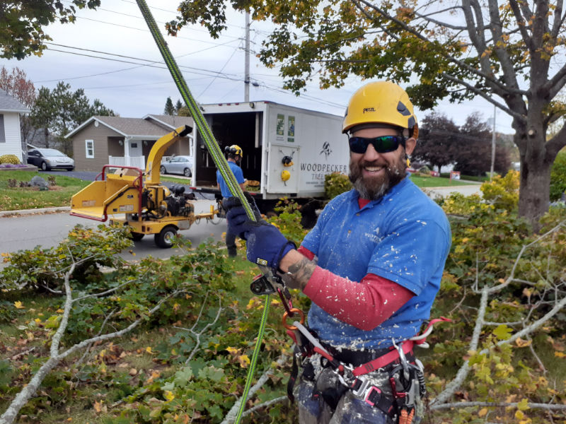 Arborist Luciano Onichino, covered in sawdust, is pleased with the tree trimming job he has just completed in Amherst. Rory Fraser works in the background.