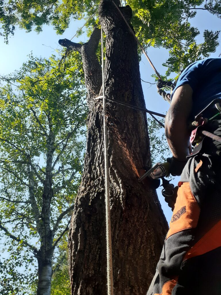 A person saws a metal piece attached to a tree trunk with an electric saw.