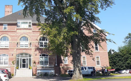 A heritage elm stands outside the old Prince Edward Island Hospital on Kensington Rd in Charlottetown