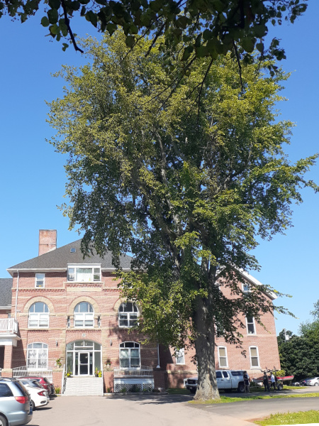 A beautiful American Elm shades the building now owned by Killam Properties