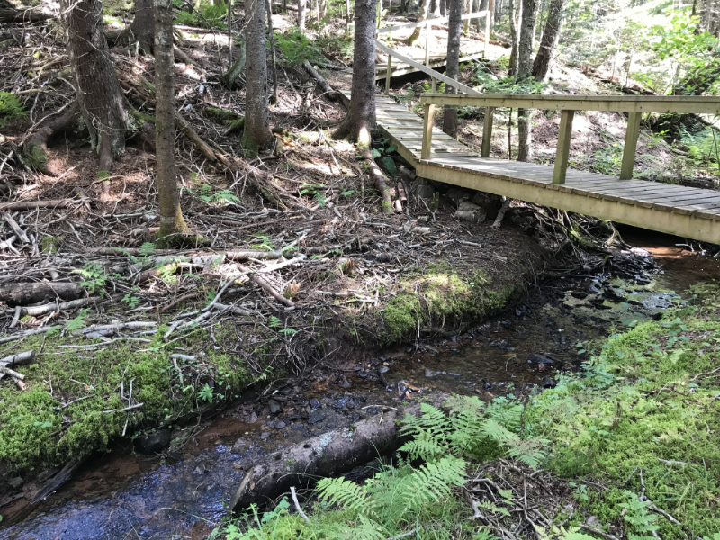 A wooden bridge passes over a river in the forest.