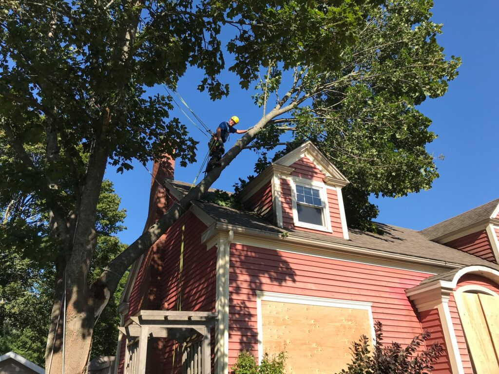 A large branch of a tree crashed on a house roof. Rory is on the branch, secured, smiling at the camera.