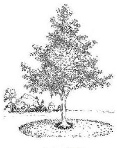 An illustration of a mulch circle.
